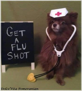 My first cousin (on my father's side) Dolce Vita wants to remind you to get your flu shots (I'm not sure if dogs can get them, or the flu).