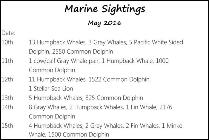 marine-sightings-2016-05