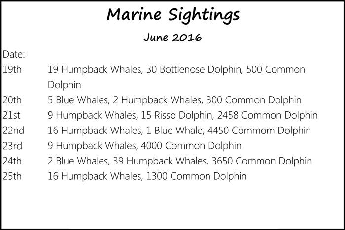 MarineSightingsJune-19th-25th