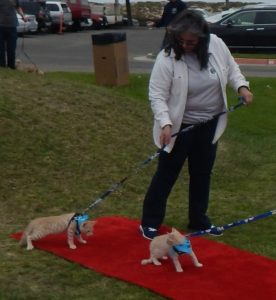 "At the recent Felix n'Fido Bring Me Home Adoption Festival cats weren't very cooperative in walking down the ""red carpet"" to be adopted."