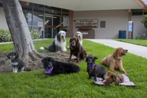 "These are the original ""Paws"" dogs at the Wright Library. Some of them are still working."