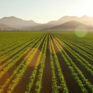 The 4th Annual Ventura Farm Day is an agricultural celebration.