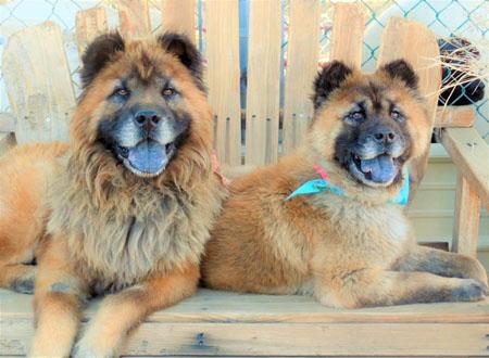 Carl Dog Adoption Ventura
